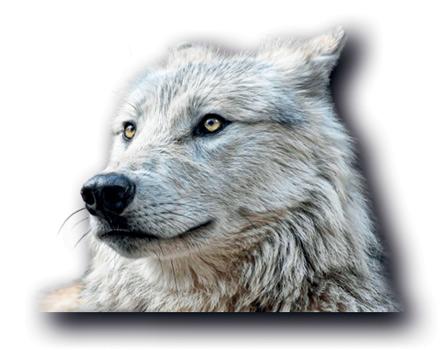 Une Faim de Loup